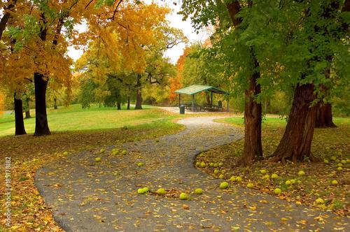 Fotobehang Herfst An autumn path in a city park.