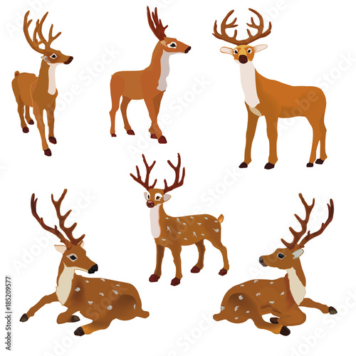 Set of vector  deer