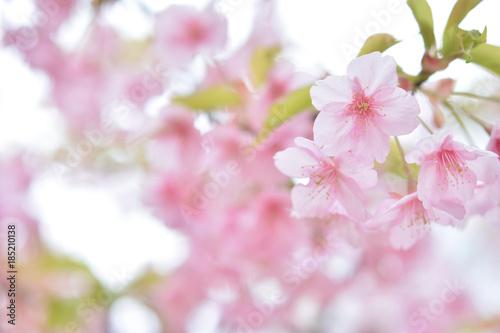 Fotobehang Lichtroze 桜の花 早春