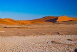Sand dunes in the Namib desert at dawn, roadtrip in the wonderful Namib Naukluft National Park, travel destination in Namibia, Africa. - 185224171