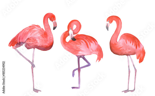 trzy-rozowe-flamingi