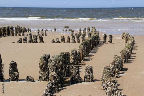 Foto op Canvas Noordzee mit grünem Moos und Muscheln ueberzogene Holzbalken am Strand vor Wellen der Nordsee.Where: Sylt, Nordseestrand.When: 31.05.2013