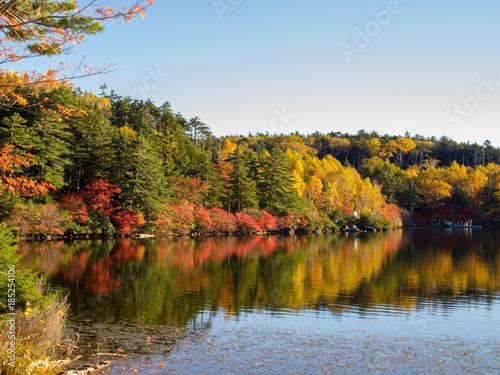白駒の池 湖畔の紅葉 © kura