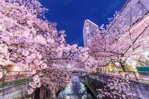 Fotobehang Lichtroze 都会の夜桜