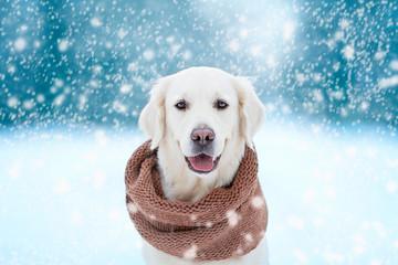 dog on winter background