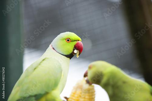 Aluminium Papegaai Colorful Birds of Malaysia