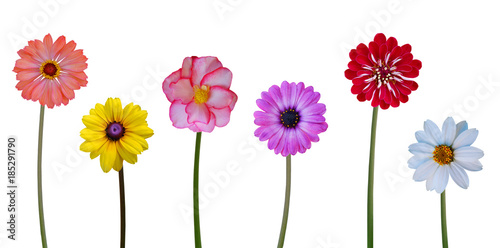 Aluminium Gerbera Collection flowers on white background