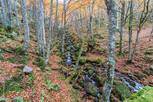 Foto op Plexiglas Weg in bos autumn arrives at the beech forest of El Gumial