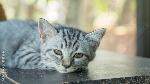 Foto op Plexiglas Kiev Gray striped kitty lying in the room.