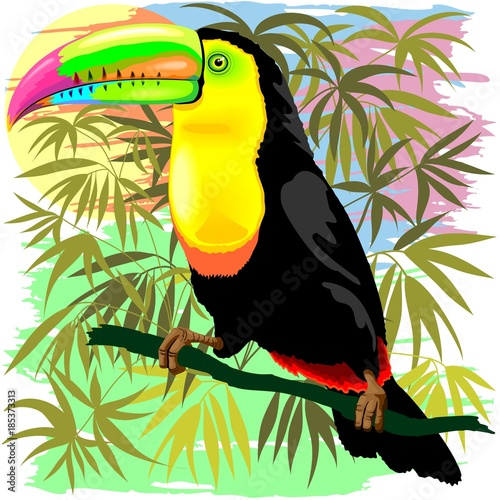 Poster Draw Toucan Wild Bird from Amazon Rainforest