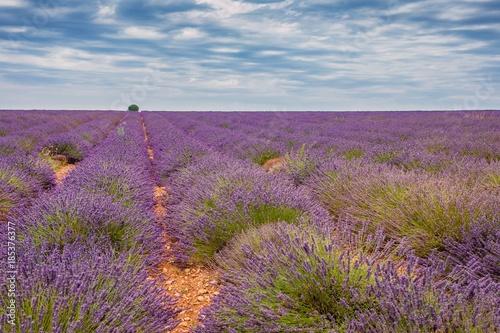 Fotobehang Lavendel Lavandes du plateau de Valensole