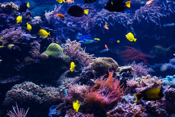 Underwater scene. Coral reef, colorful fish groups