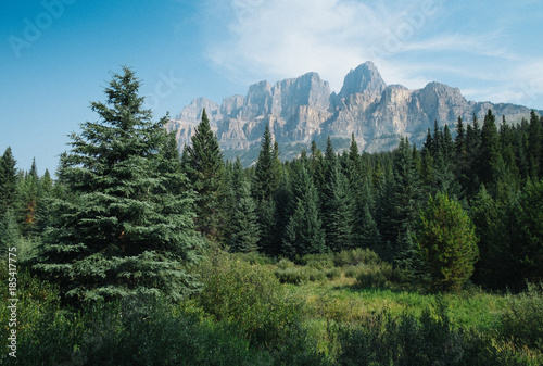 Fotobehang Blauw Wald