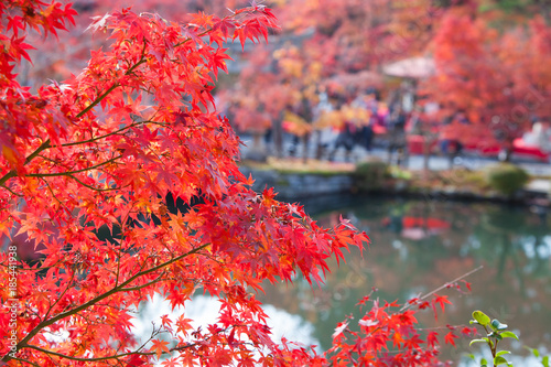 Fotobehang Kyoto Red maple leaves in Eikando temple,Kyoto,Japan