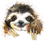 Watercolor sloth ill...