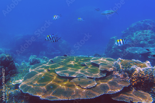 The sunlit coral reef in lagoon of South China sea near Redang island, Malaysia