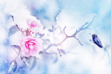 Little fantastic blue and purple bird in the snow and frost on the background of beautiful pink roses. Artistic Christmas winter image. Selective focus. Blue purple picture.