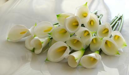 arum lily on white