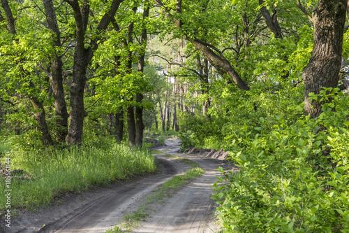 Aluminium Lente Spring in the deciduous forest.