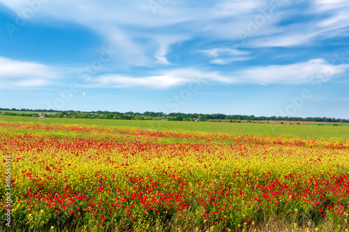 Foto op Canvas Klaprozen Field of bright red poppy flowers in spring.