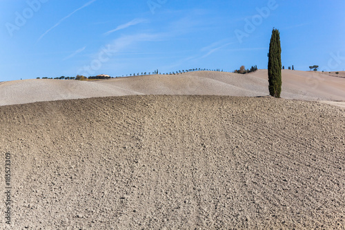 Deurstickers Toscane Picturesque Tuscany agricultural landscape. Lonely cypress against the background of the blue sky and curved plowed fields with brown halftones, Italy