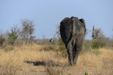Elefant walk