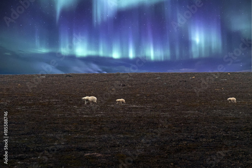 Fotobehang Ijsbeer Polar bear mother and baby in Svalbard on northern lights background
