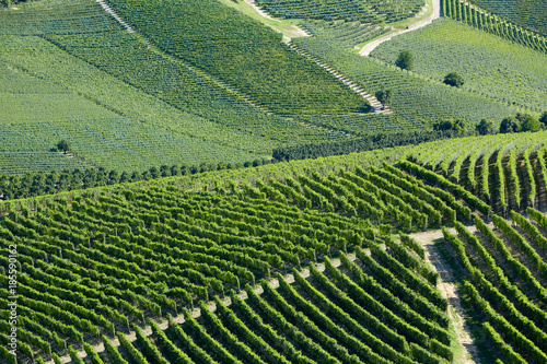 Foto op Plexiglas Pistache Vineyards green background in a sunny day on hills in Italy