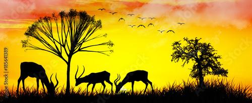 Fotobehang Geel cabras comiento en el campo al amanecer