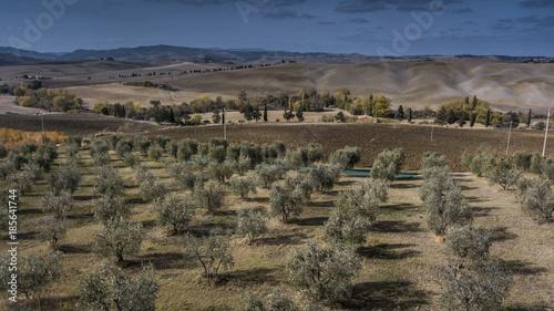 Deurstickers Toscane olive garden