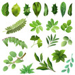 Set of green leaves of trees and bushes. Hand drawn vector illustrations on white background.
