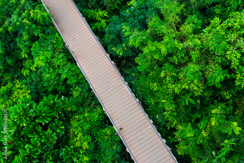 walkway over the forest - 185666575