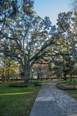 Path through the oak trees and Spanish Moss in Forsyth Park, Savannah