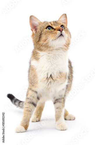 Kitten on white background. - 185692342