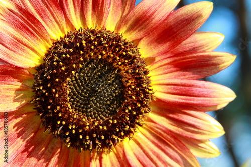 Aluminium Gerbera sunflower