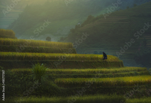 In de dag Rijstvelden Terraced rice field landscape of Mu Cang Chai, Yenbai, Northern Vietnam