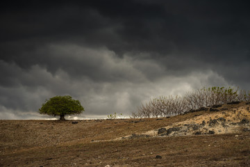 Dried Savannah and the Dark Clouds