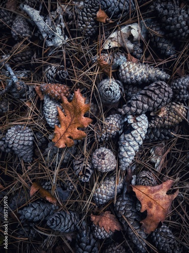 Cones in the forest - 185735978