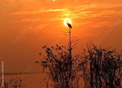 Poster Oranje eclat silhouette of Egret