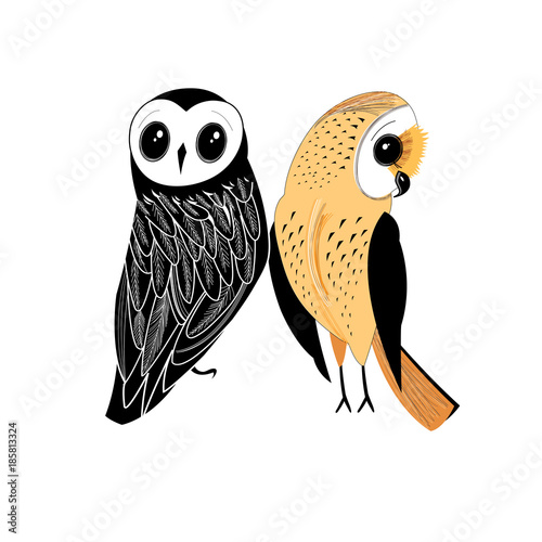 Graphic two owls - 185813324