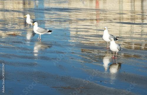 mewy plaża refleksy na wodzie