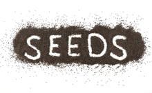 Dried Black Seeds    Sticker