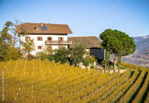 Foto op Plexiglas Honing Vineyard in South Tyrol in Autumn