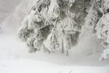 Donmuş çam yaprakları - 185832778