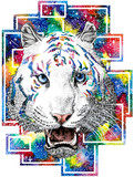 drawind of white tiger