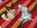 Two funny sleeping cats