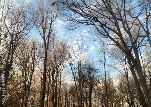 winter morning clouds over forest