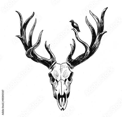 deer-skull-and-bird