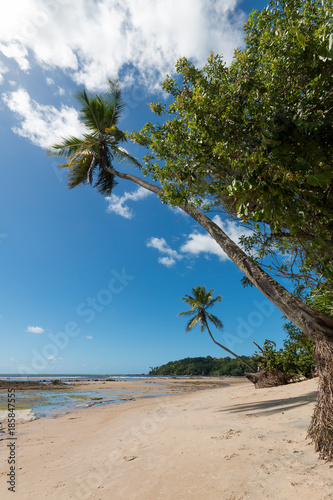 Foto Murales Tropical beach with coconut palms - Boipeba Island