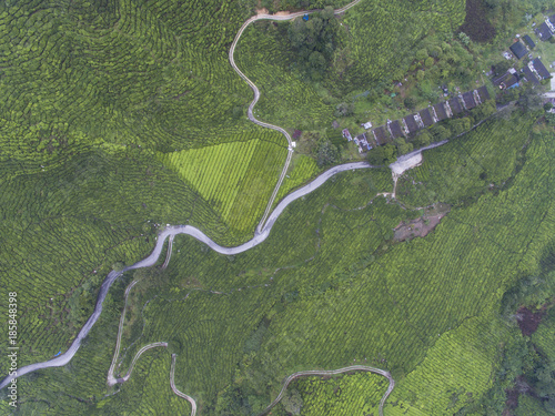 Foto op Aluminium Khaki aerial view of tea plantation located in Cameron Highland, Pahang, Malaysia